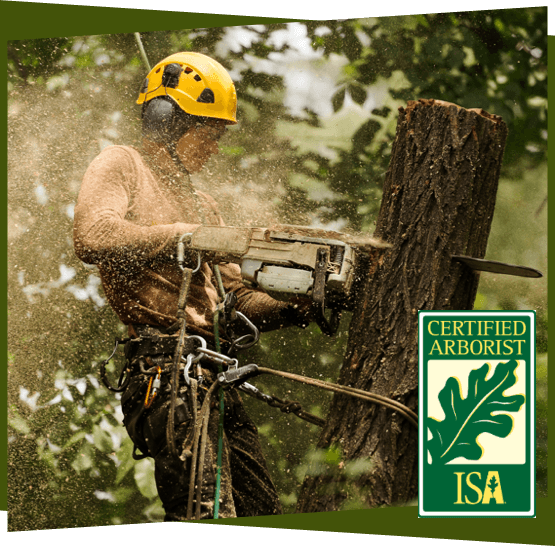 Certified arborist doing tree removal service.