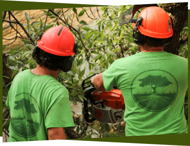 Two arborists doing tree removal in Ottawa.