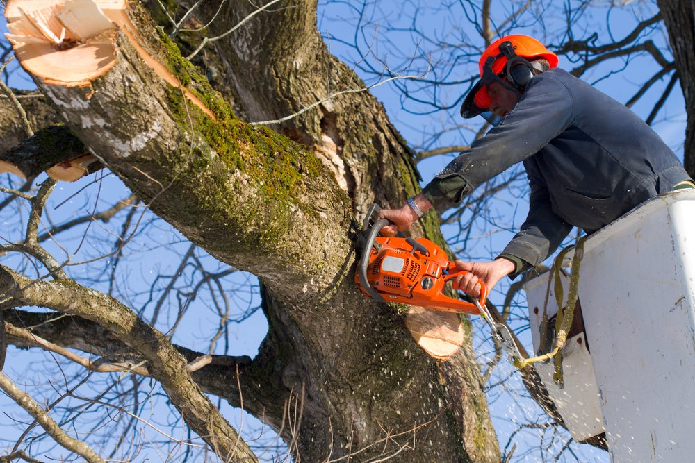 professional tree removal in Ottawa