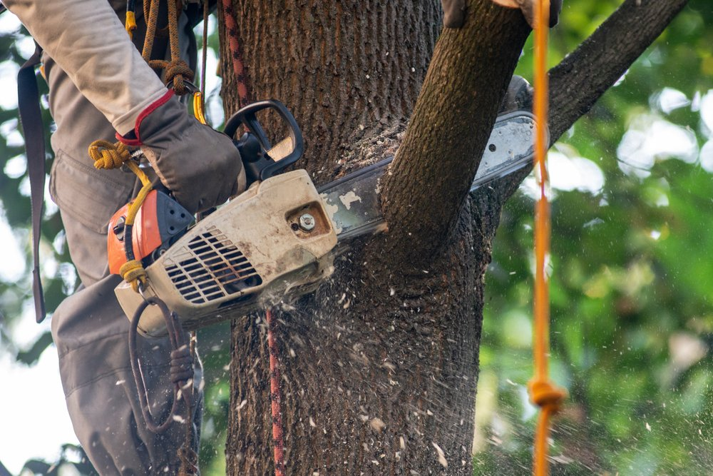 arborist cutting tree with chainsaw