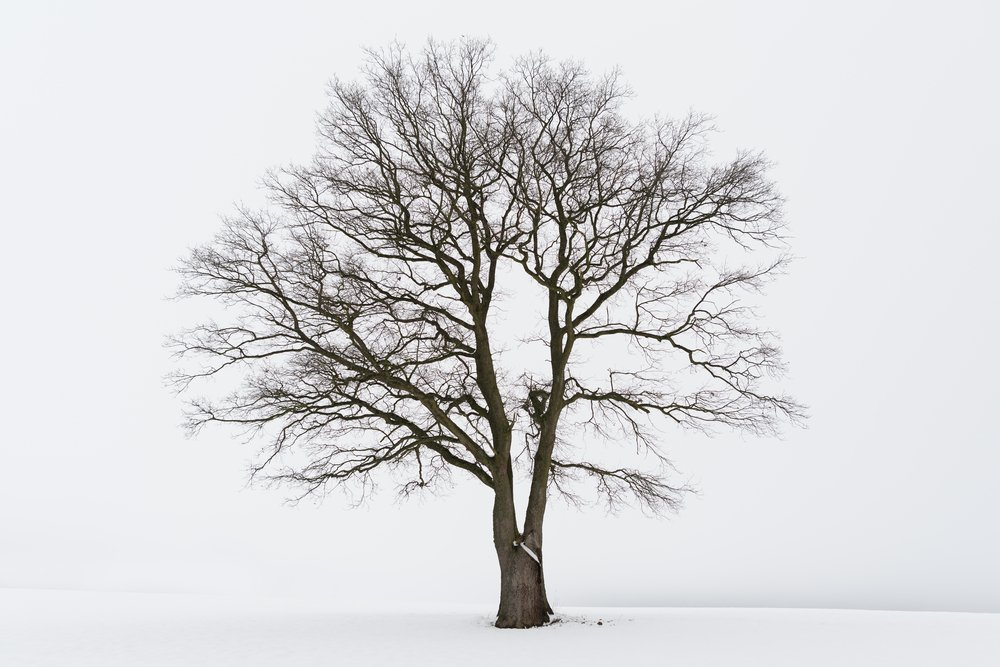 A single tree during winter surrounded by snow.