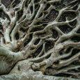 tree roots in Ottawa yard.