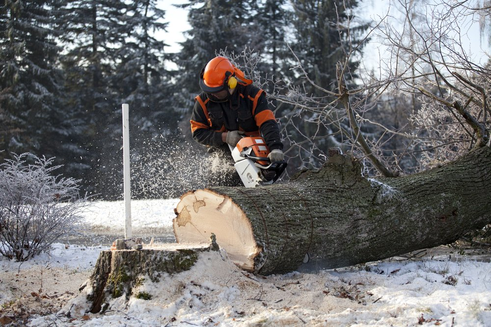 cutting down a tree in winter in ottawa