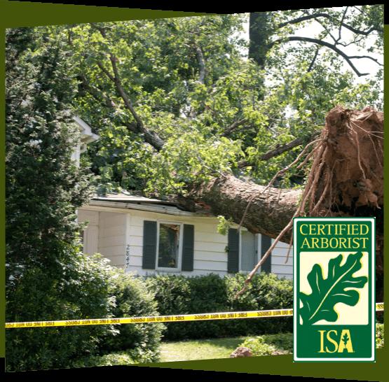 Tree fallen on top of an Ottawa house.