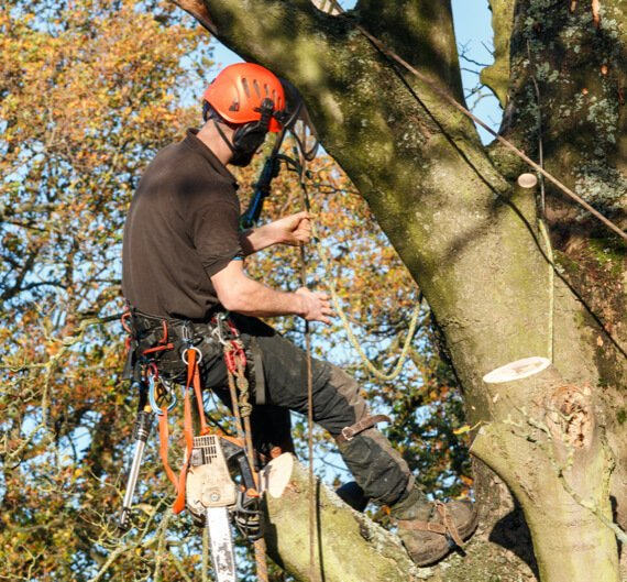 Tree service worker in safety equipment adjusting his rope while working on a tree.