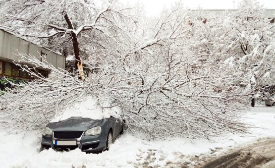 Tree fallen on top of a snow covered car in a driveway.
