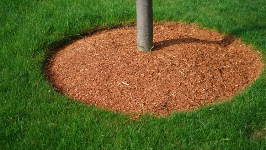 mulch around tree in ottawa yard