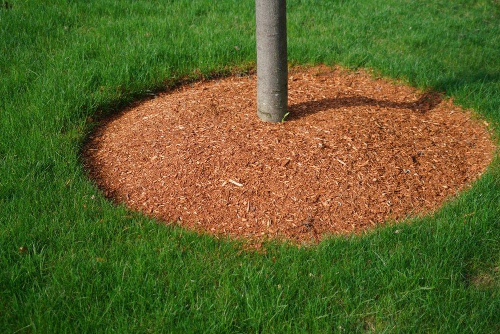 mulch around tree in ottawa yard