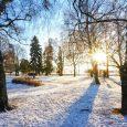 bare trees on ottawa winter day