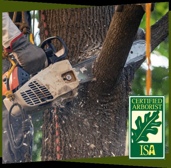 a chainsaw cutting through a tree branch