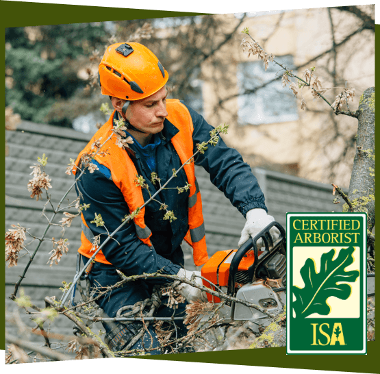 a certified arborist cutting down a tree