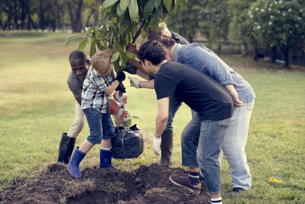 ottawa homeowners planting a tree