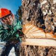 arborist cutting tree in ottawa
