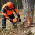 arborist executing tree removal in ottawa