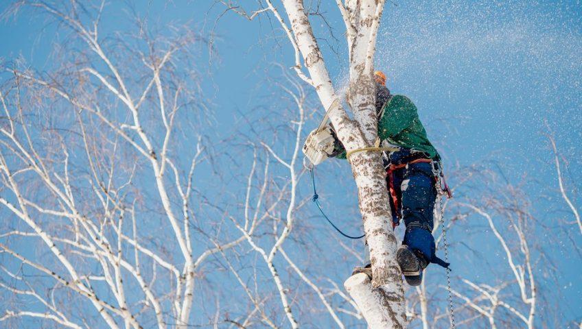 arborist working on tree in ottawa