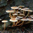 Ottawa canada tree mushrooms