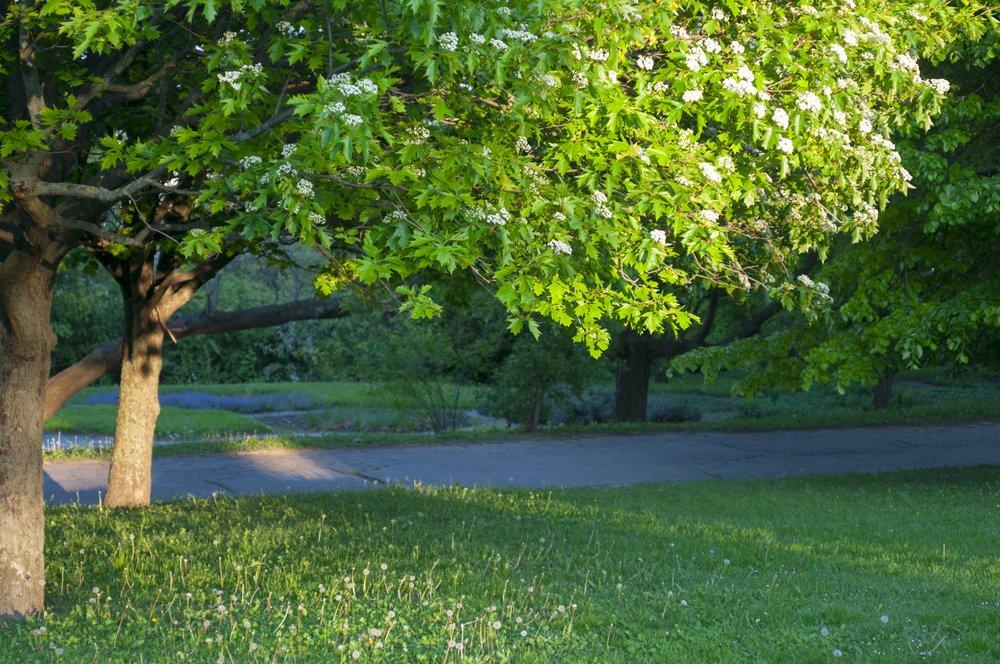 tree in yard in ottawa