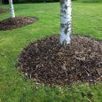 mulching in yard with trees