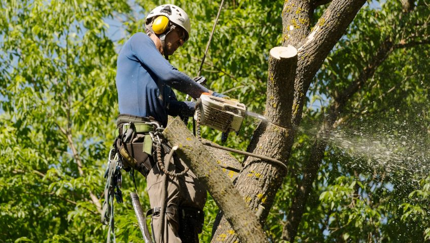 arborist tree removal