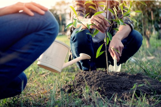 a man and woman watering their newly planted tree