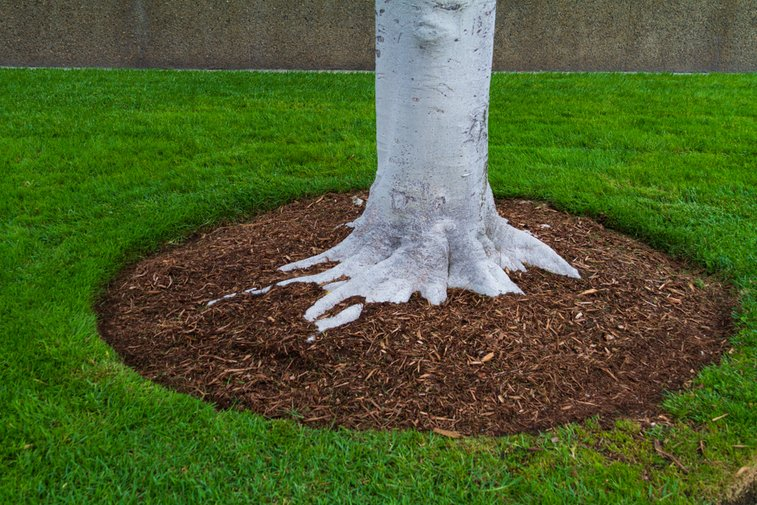 a tree surrounded by tree mulch