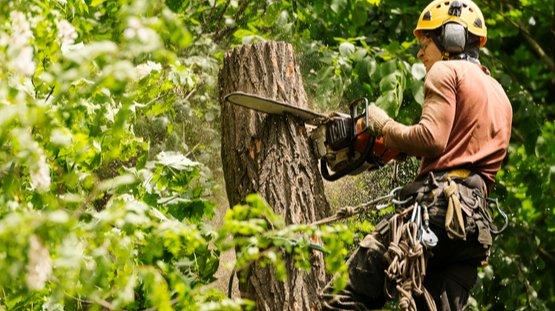 a professional arborist cutting down a tree